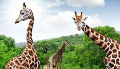 هل جربت من قبل متعة السفر والسياحة في جنوب إفريقيا؟ 3
