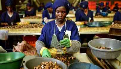 """الحكومة التنزانية تسعى إلى شراء """"الكاجو"""""""