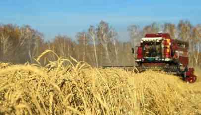 روسيا تمد السعودية بأول دفعة تجريبية من القمح
