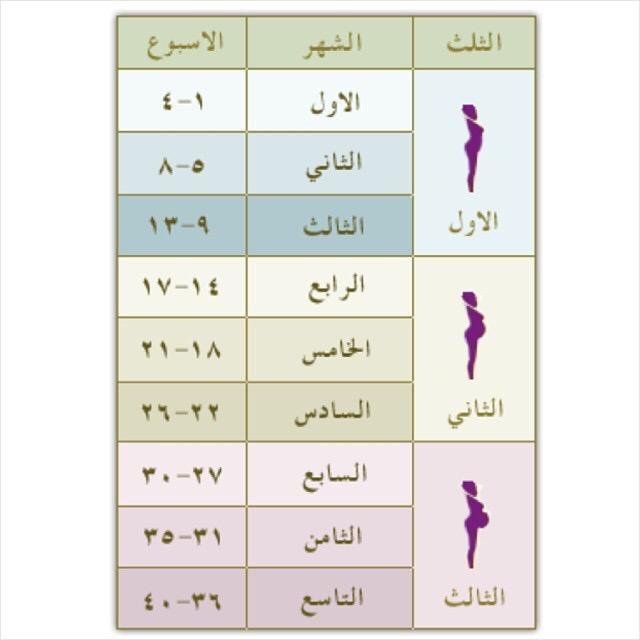 مراحل نمو الطفل في أسابيع الحمل الساعة 25 كل أسبوع من أسابيع الحمل يشكل تطور في الجنين