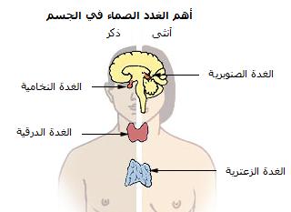 الغدد الصماء