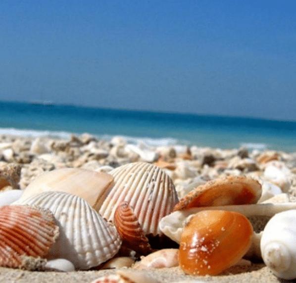 تفسير حلم جمع صدف البحر للعزباء