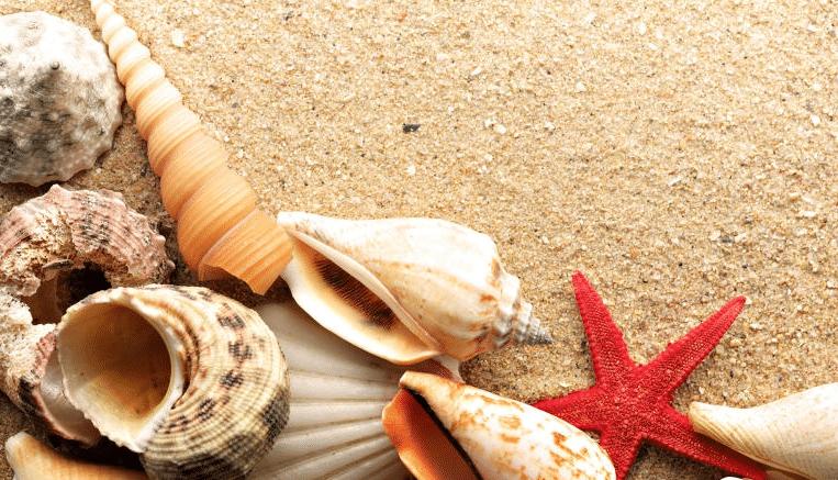 معرفة تفسير حلم صدف البحر في المنام للحامل