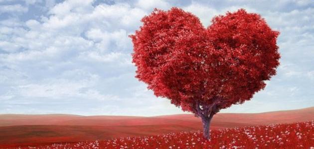 ساحرية الحب بين الغيرة والتشابك والتمكين