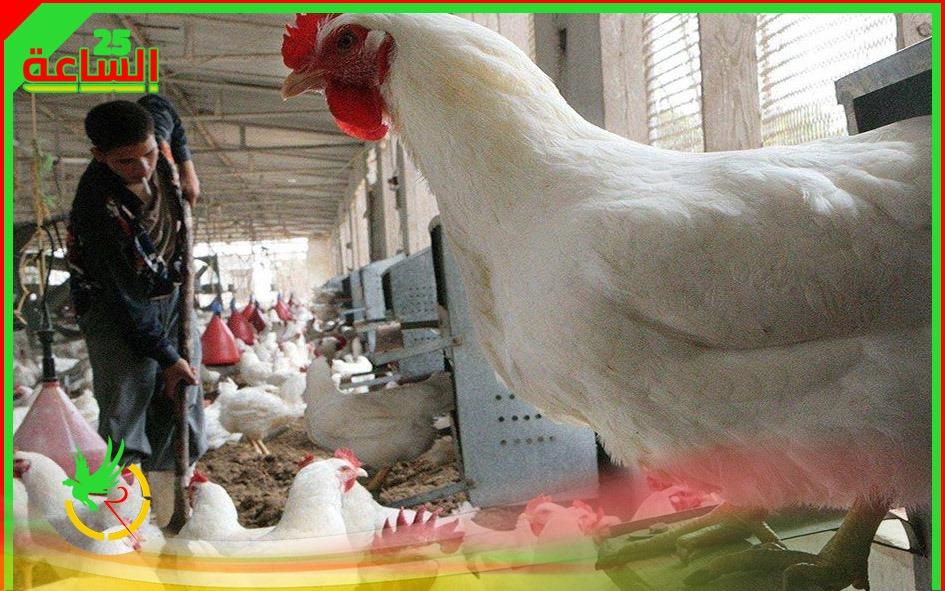 انفلونزا الطيور ينافس فيروس كورونا