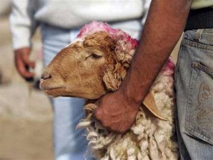 ذبحِ العتيرة (الذبِيحة) في رجب