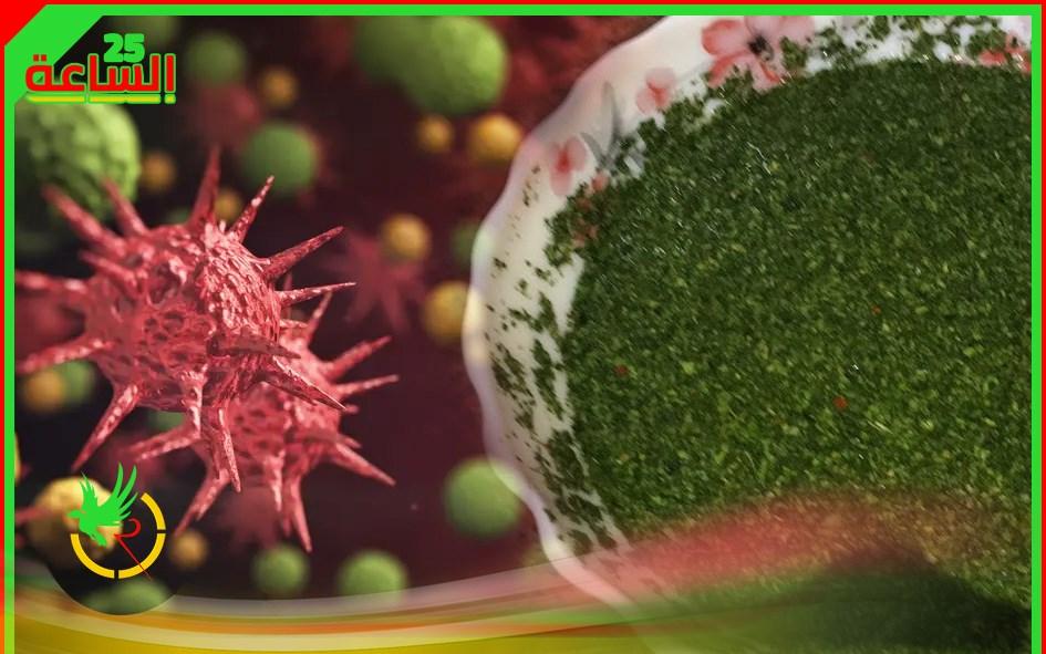 الشلولو هل يقي من فيروس كورونا فعلا؟