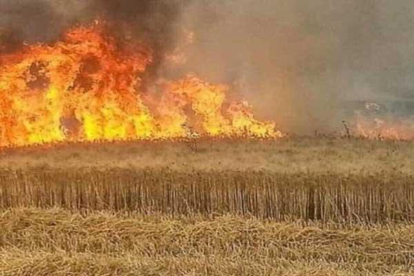 العثور على جثث مزارعين قتلهم داعش وحرق أرضهم