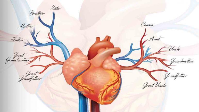 جميع المعلومات عن ارتفاع نسبة الكوليسترول بالدم