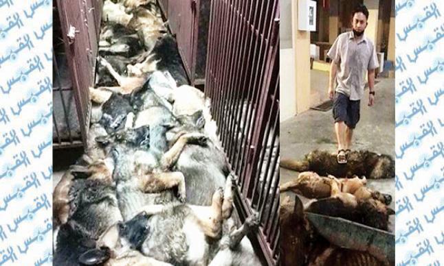 ذبح الكلاب والخفافيش في الصين بشكل سري