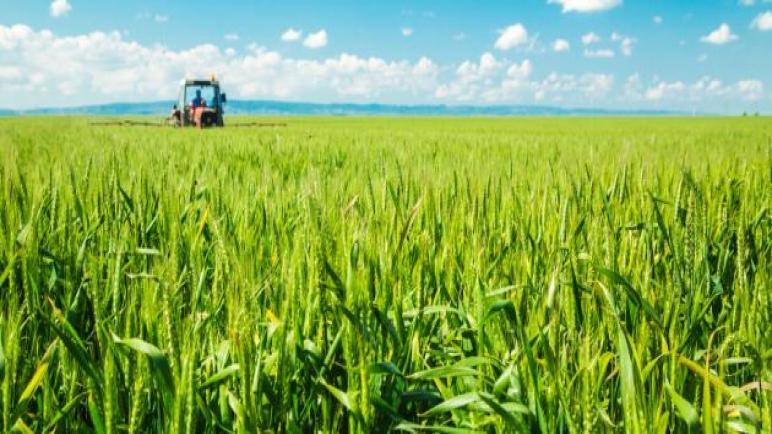 المبيدات المغشوشة أفسدت 20% من محصول القمح في مصر